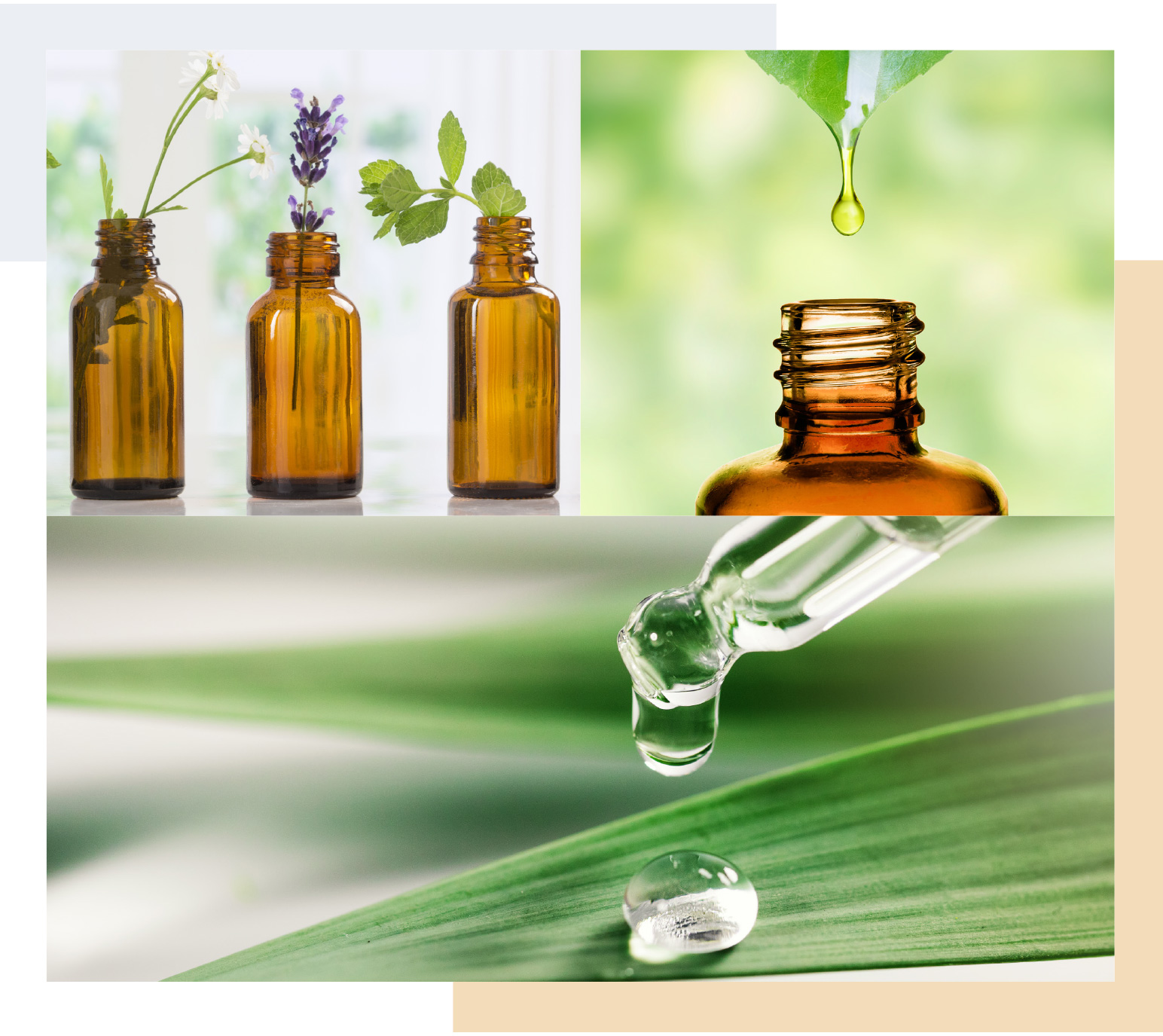 Oil bottles and oil dropper on a green background