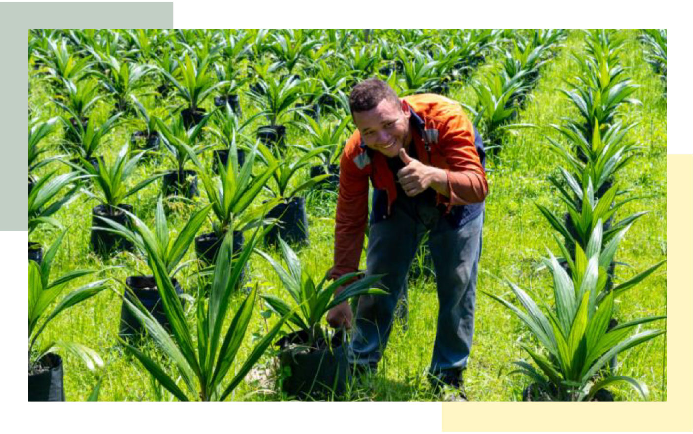 Worker in palm oil tree field, planting new crops