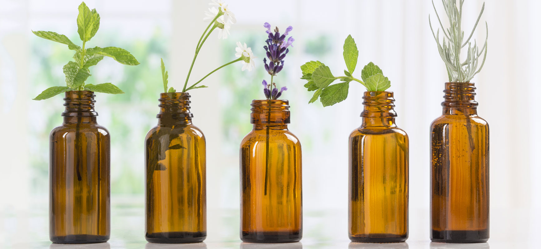 Oil bottles with a selection of botanicals displayed in bottle